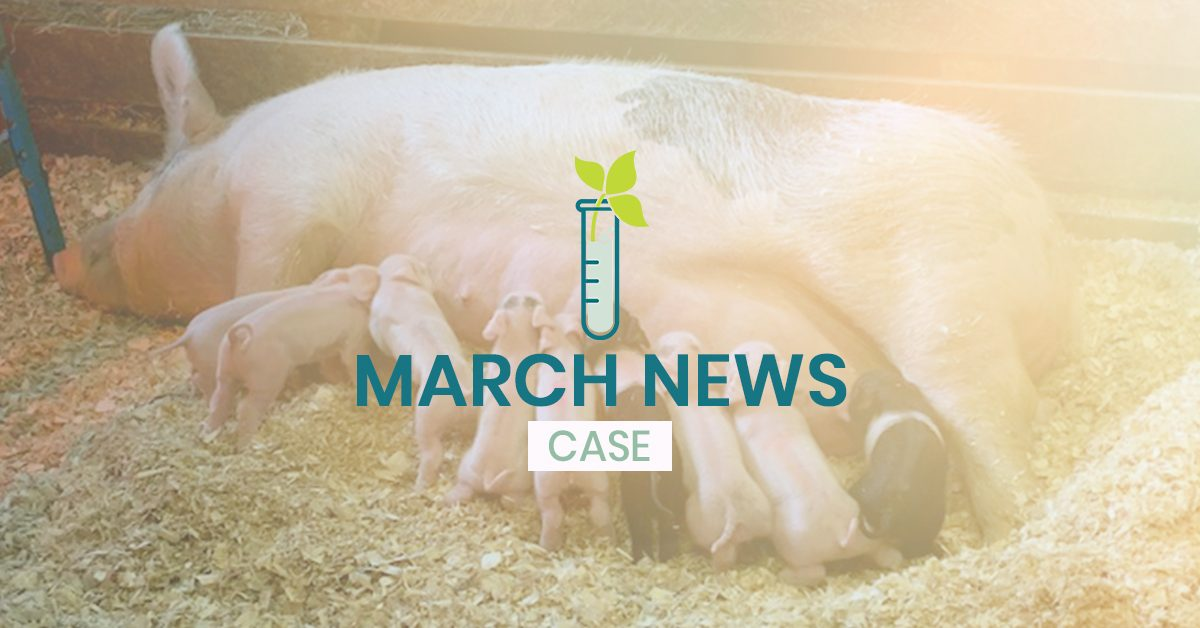 CCTC March news for CASE program - Mother pig and piglets in background